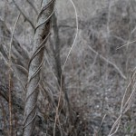 winter vine - digital photograph by Native American Indian photographer Jude Norris